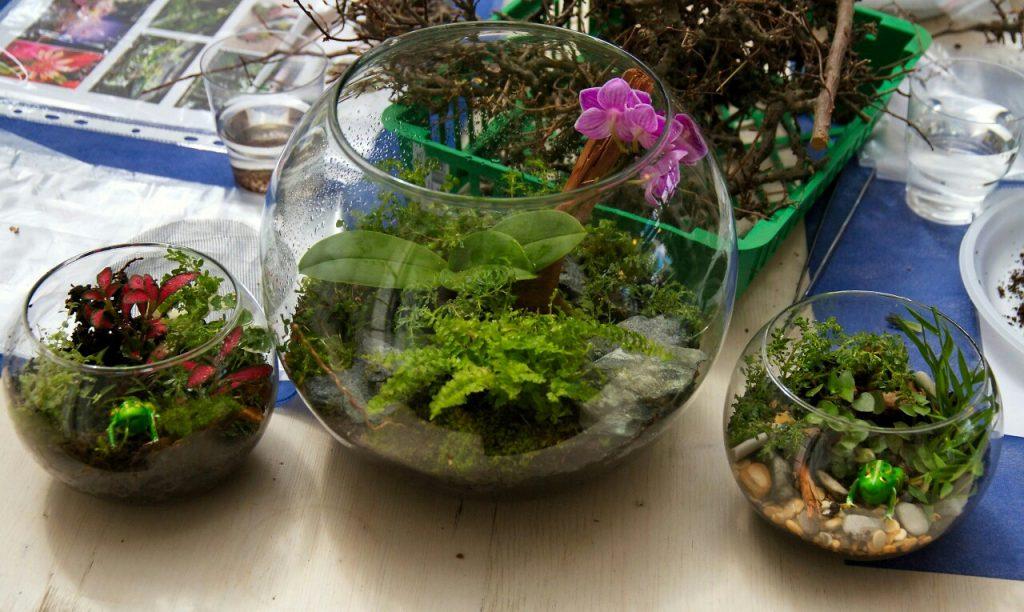 Флорариум в круглом аквариуме