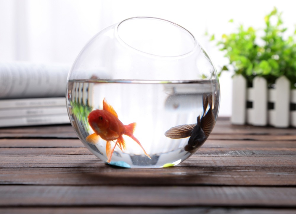 Круглый или квадратный аквариум?