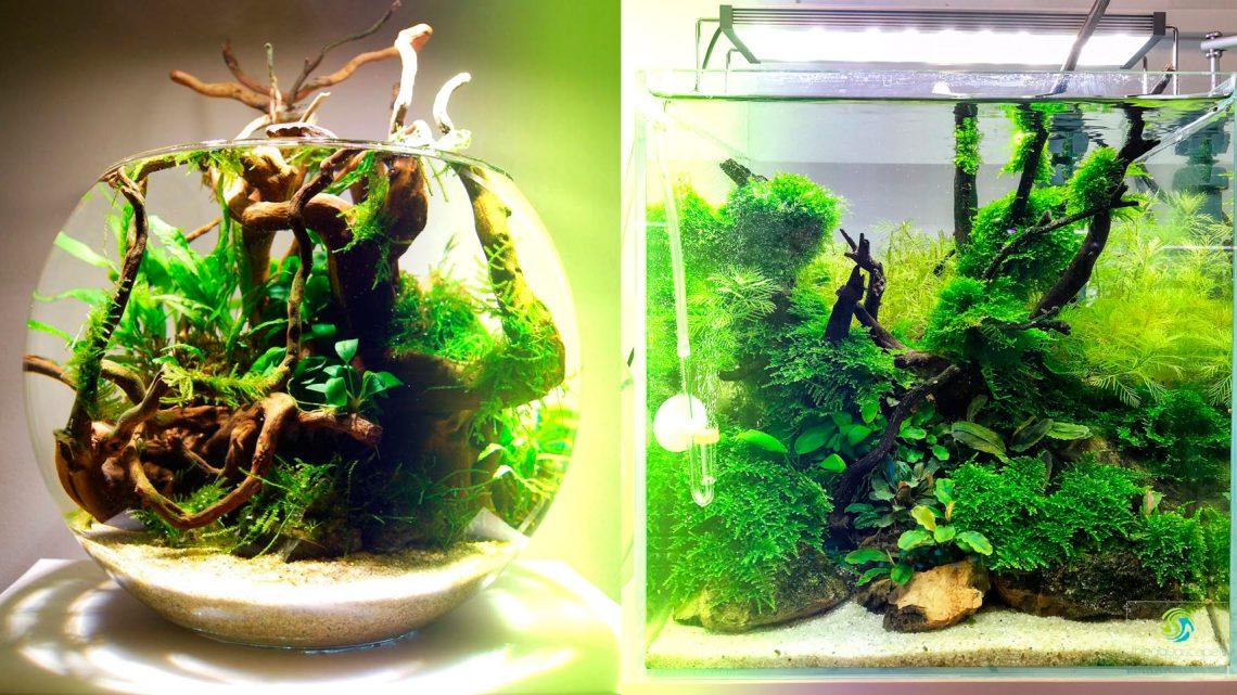 Круглый или квадратный? Выбираем аквариум.
