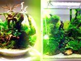 Круглый или квадратный аквариум