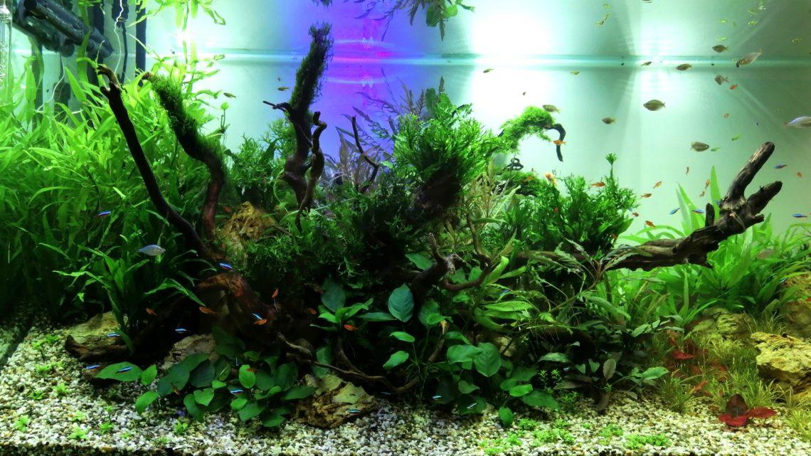 Установка и обслуживание аквариума